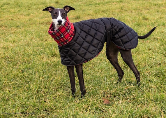Greyhound waterproof winter coats with a long fleece neck.