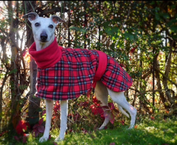 Whippet and greyhound all fleece winter coats