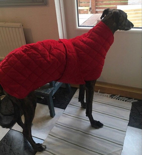 Greyhound extra warm winter coats with underbelly protection readymade