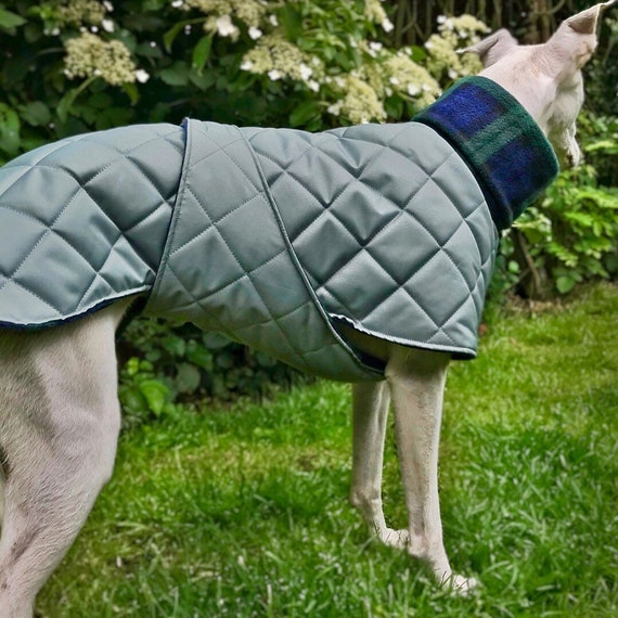 Waterproof whippet coats with underbelly protection.