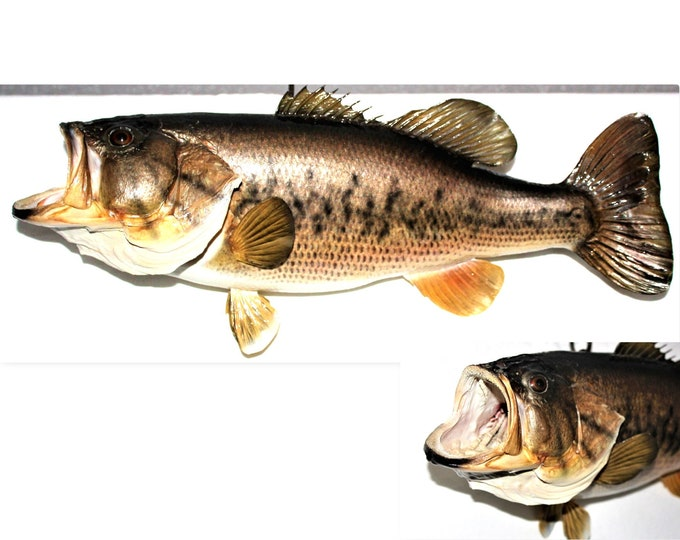 Vintage Taxidermy Fish / Largemouth Bass Taxidermy / Wall Mount Largemouth Bass