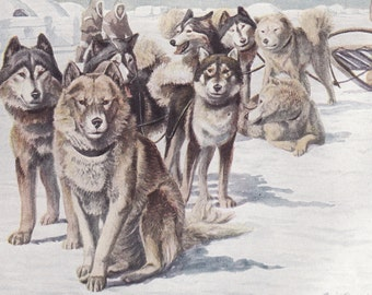 Instant Download Digital Image Animal-Dogs-Eskimo Sled Dogs-Louis Fuertes Digital Image