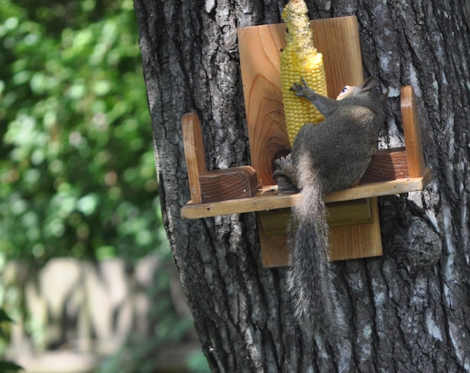 Squirrel  feeder  Hard wood and cedar wood made sealed with UV protected NON toxic finish