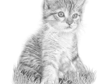 Kitten pencil drawing, Cat art print / Gift for Cat lover.