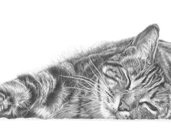 Tabby Cat Pencil Drawing, Cat Art, Cat Print, Gift for Cat Lovers.