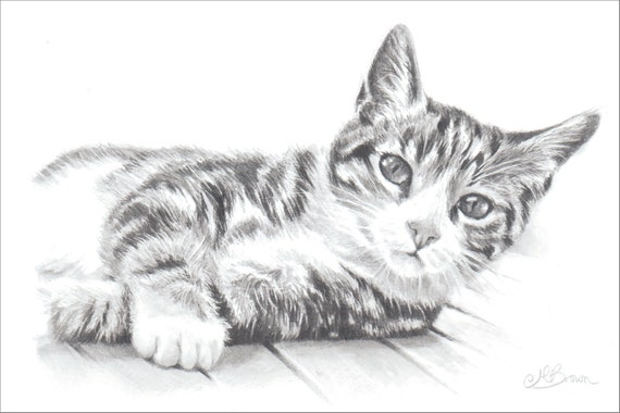 Gatto Di Tabby Gatto Stampa Artistica Matita Disegno Di Un Etsy