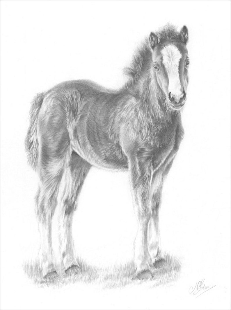 Horse Art Print Horse Pencil Drawing Horse Picture Gift For Etsy