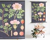 Rose print, Rustic print, school poster, black botanical, Jung Koch Quentell chart, educational poster