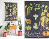 Botanical Art, Botanical Illustration, Floral Print, Nursery Print, Educational Wall Art, Kids Room Prints, Bedroom Wall Art, Pull Down Map