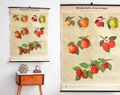 Botanical Illustration, Floral Print, Poster Print, Pull Down Chart, Botanical Chart, Roll Down Poster, Nursery Poster, Kids Room Art, Boho