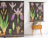 Vintage botanical chart, botanic school pull down chart, Iris flower, school poster, botanical poster, botanical print