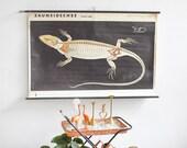Vintage Lizard Poster