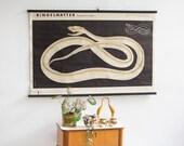 Snake poster, snake print, Pull down chart, educational chart, GDR zoology print Berlin