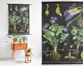 Botanical print, botanical posters, antique botanical prints, botanical wall chart, black poster, educational poster, pull down chart