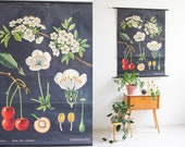 Nursery Poster, Pull Down Chart, Roll Down Map, Kids Room Wall Art, Living Room Decor, Bedroom Wall Art, Pull Down Map, Botanical Chart