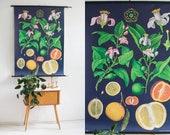 Vintage botanical chart, botanic school pull down chart, citrus fruits, school poster, botanical poster, botanical print