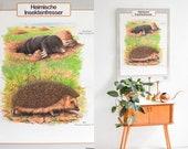 Vintage German educational poster, pull down chart, school map, poster mole hedgehog, educational chart automobiles, school chart