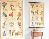 Botanical Poster, Botanical Prints, School poster, Pull Down Chart, Botanical Print, Botanical Wall Chart, Floral Print, Poster Print