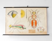 Vintage school print, hornet poster, hornet print, insect print, insect educational poster, roll down chart, school poster hornet, chart