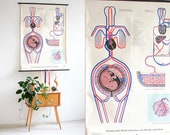 Baby poster, baby mama print, educational poster, baby development anatomical school pull down chart