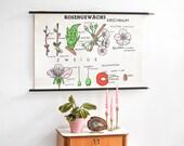 Botanical Poster, Floral Print, Poster Vintage, School Poster, Nursery Print, Educational Chart, Educational Wall Art, Kids Room Poster