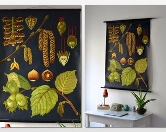 RESERVED Vintage school pull down chart map botanical hazelnut flower plant West German biology print