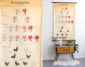 Vintage pull down poster, hereditary roll down chart, genetics poster, school print, industrial print, educational print