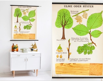 Botanical poster, vintage tree print, school poster, educational poster,roll down chart elm tree, educational material botanical, school map