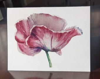 Alaskan Poppy
