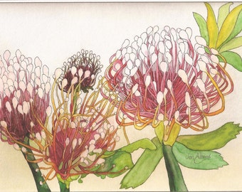 Flowers of South Africa in watercolor note cards.
