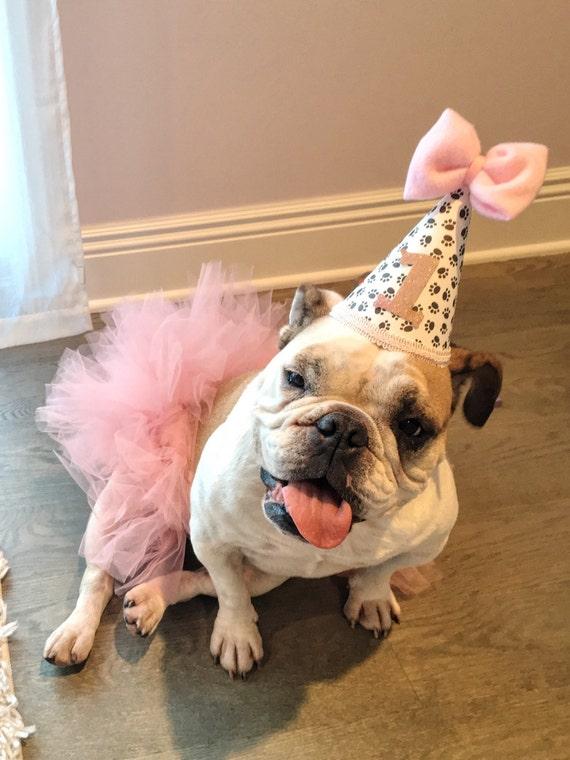 Mini Birthday Hat Dog First