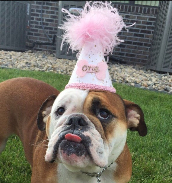 1st Birthday Hat Mini First Dog Cake Smash