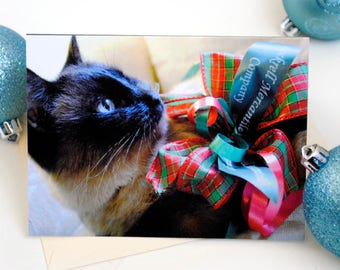 Cute Cat with Bow Christmas Cards: Siamese Cat Blank Greeting Card, Fine Art Photography Holiday Greeting, Cat Lover Xmas Gift
