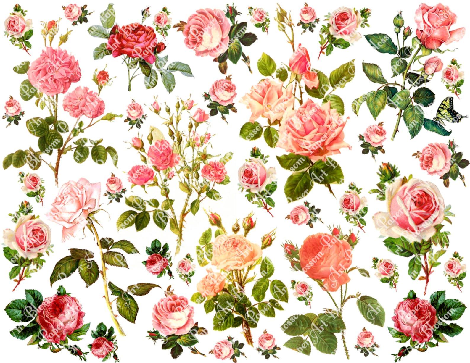 Картинки листья розы скрапбукинг