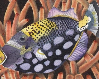 ACEO Artist Trading Card Handsome Fish  from my  original watercolor painting ATC on MATTE paper