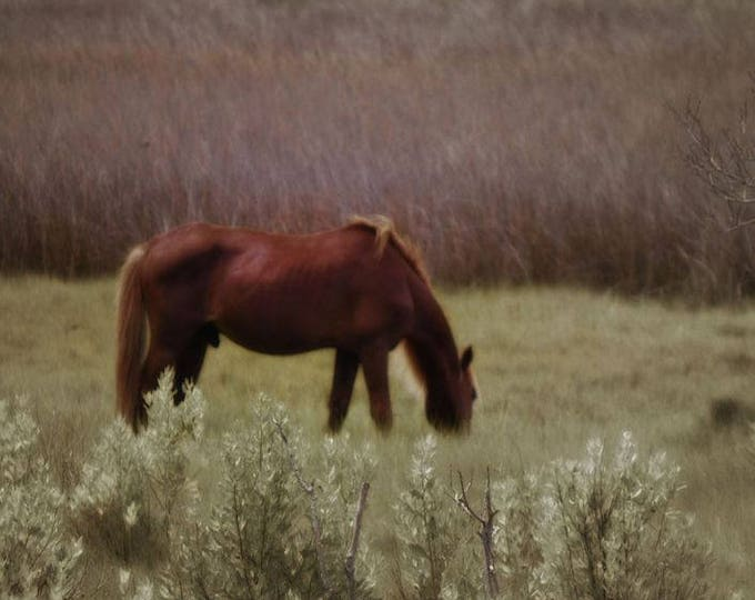 Wild Pony Grazing