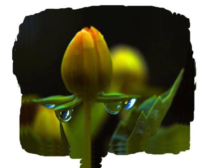 Rain Bud