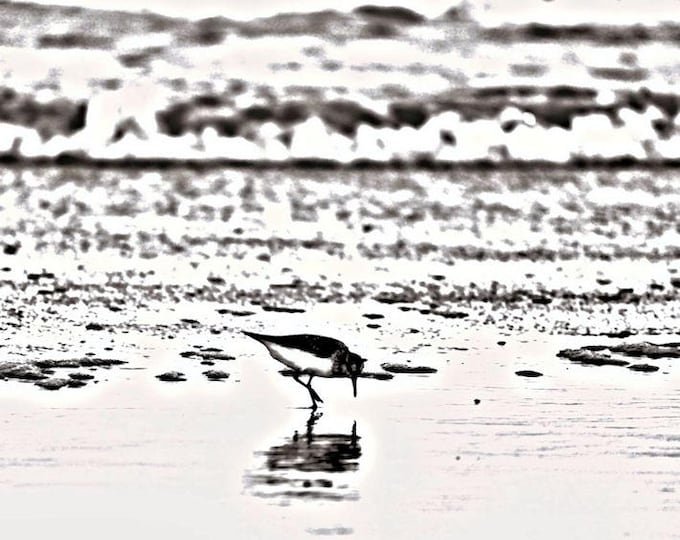 Sandpiper in Black and White