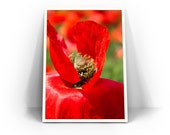 """Red Poppy Photograph - Red and Green Home Decor, Botanical Wall Art, Macro Flower """"Bed of Petals"""""""