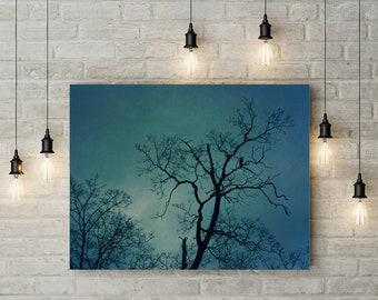 Crow Silhouette Photograph - fine art photography, corvid wall art, blue sky, goth, tree, Winter