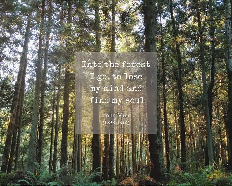 John Muir Quote Into the forest I go  Inspirational Quote  image 0