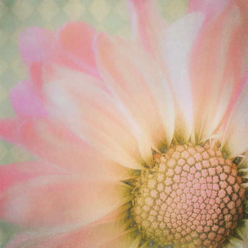 Soft Romantic Daisy Print  Pastel Floral  Romantic Wall image 0