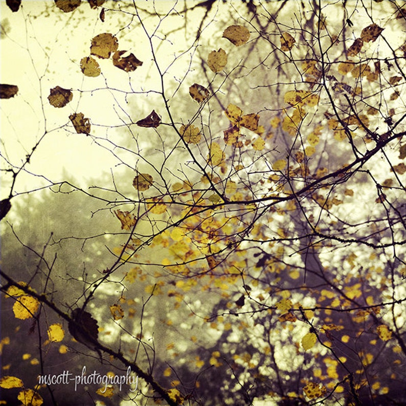 Woodland Photography  Yellow Leafy Tree Canopy  Dreamy image 0