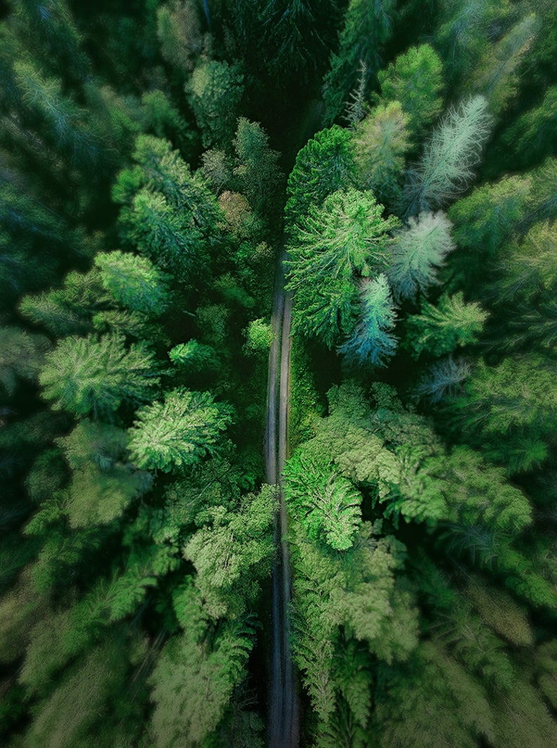 Arial Treetop Photography  Winding Road  Evergreen Trees  image 0