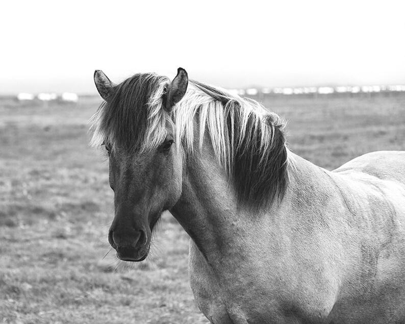 Iceland Pony  Folk Vibe  Equine Photography  Horse Print  Full Frame w/Scenery