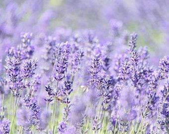 Pacific Northwest Lavender Fields Print | Purple & Green Floral | Romantic Wall Decor | Dreamy Floral Photo | Sequim, WA Art