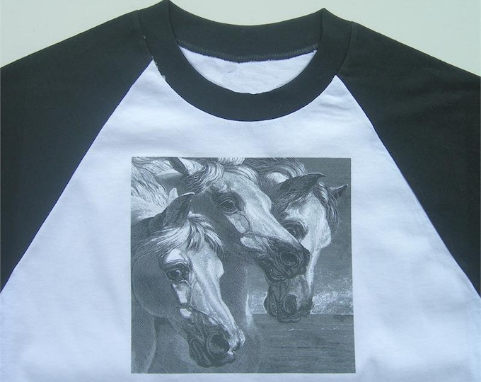 The Pharaohs Horses raglan top