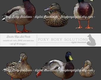 Ducks Complete Set (color, black & white, and sepia tone): Clip Art, set of 18 images