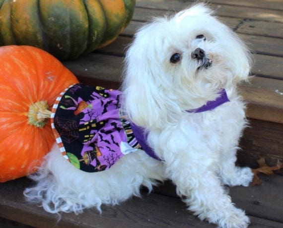 Halloween Dog Dress, XS Holiday theme skirt with Purple Bodice dresses for dogs