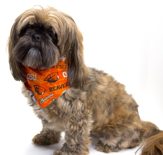 Dog Bandana, Made with OSU Beavers Fabric, Tie On Perfect Fit - bandanas for dogs.